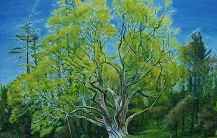 Brian Ború Tree Spring, Tuamgraney, County Clare.