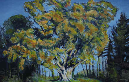 Brian Brú Oak, Summer. Tuamgrany. County Clare